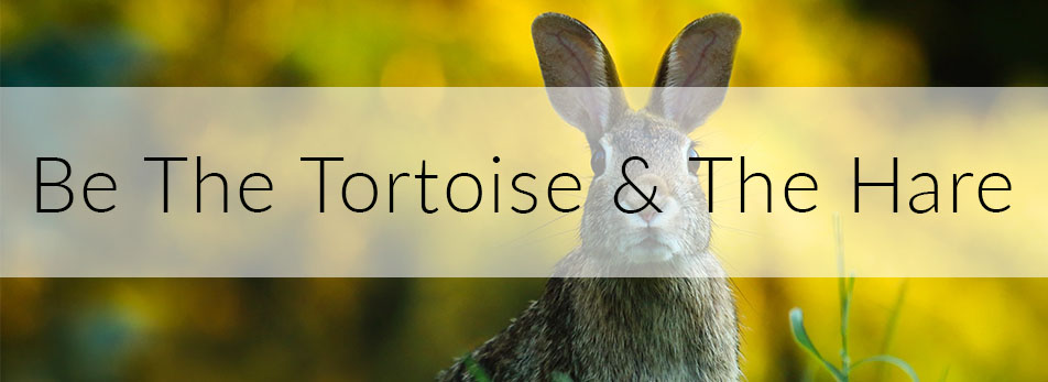 Be The Tortoise & The Hare